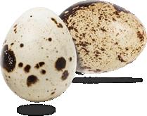 Ouă prepeliţă